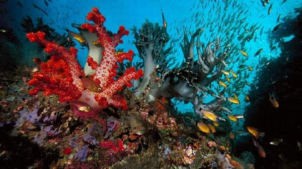 شگفتی های دریا (مستند)
