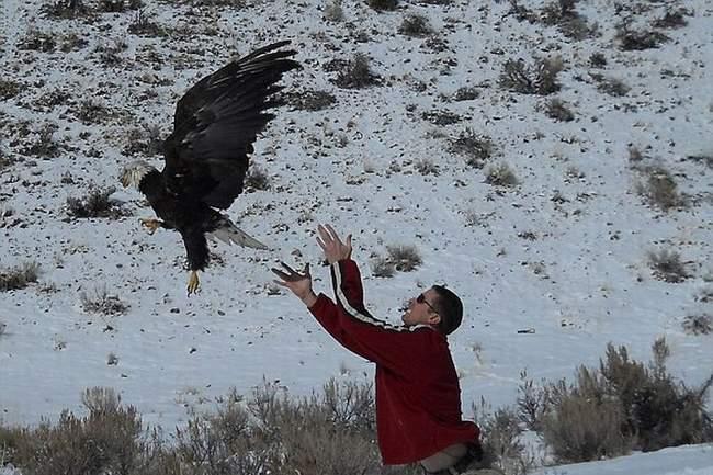 زنده ماندن عجیب یک عقاب پس از تصادف با کامیون!! + عکس