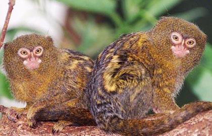 تصاویر 10 حیوان عجیب دنیا