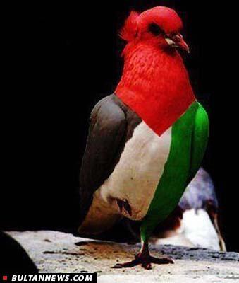 دلایل حمایت ایران از فلسطین چیست؟