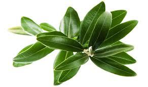 گیاهان دارویی برای پایین آوردن فشار خون