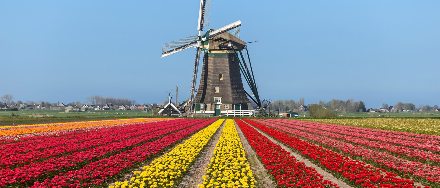 راز موفقیت کشور هلند در چیست؟