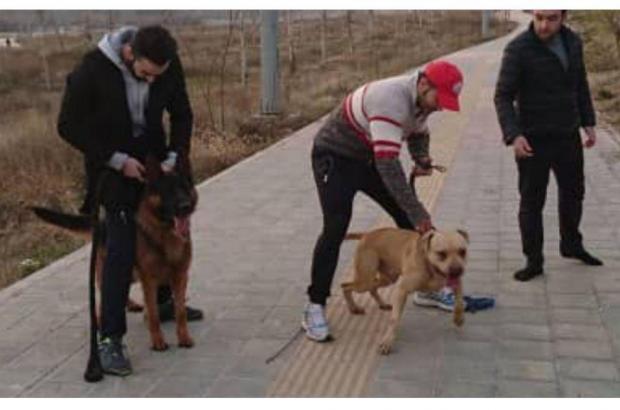 از سگ آمریکاییها تا سگ بچه پولدارهای تهران