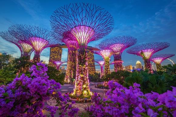 شب های سنگاپور یکی از زیباترین و بی نظیر ترین چشم اندازها را دارد. سعي كنيد براي صرف شام به بلند ترين برج شهر برويد و از چشم انداز زیر پای خود لذت ببرید. از درختان غولپیکر گراو در سنگاپور بازديد كنيد. در ساحل سنگاپور قدم بزنید و یا در حوالي بلندترین آبشار سرپوشیده دنیا عکس های بی نظیری بگیرید