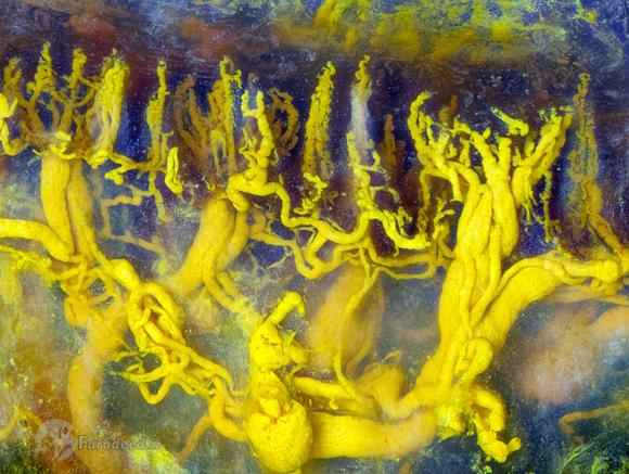رگه و رشته های شناور کرومات سرب