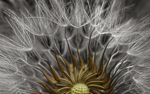 مقام دوم رقابت عکاسی میکروسکوپی نیکون، دانه و پایه یک گیاه