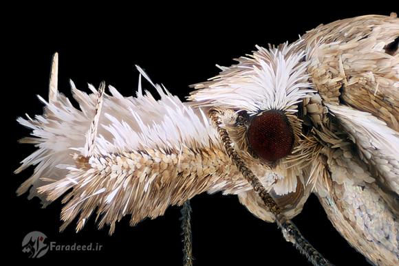 تصویری میکروسکوپی از بدن یک پروانه